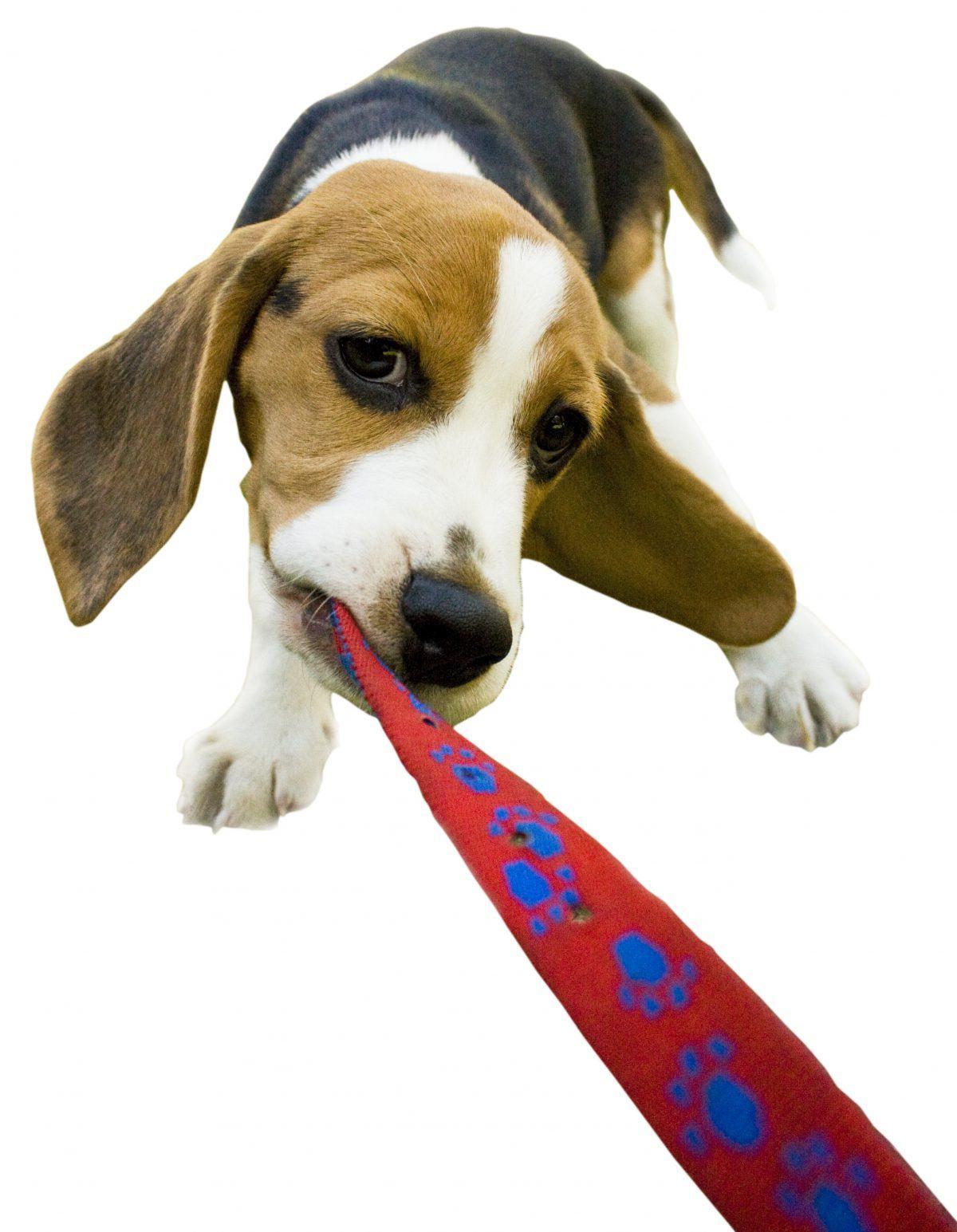 promenade chien toiletteur lyon halteopoils