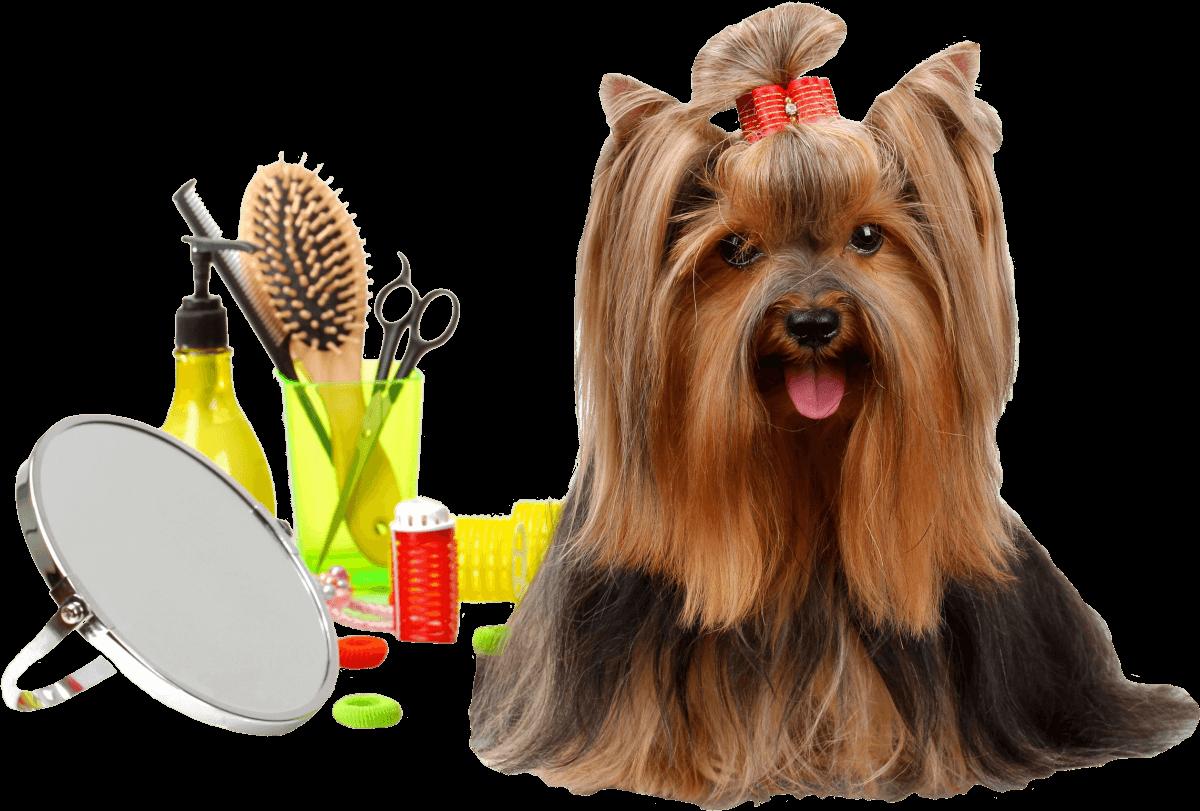 toilettage chien sur lyon